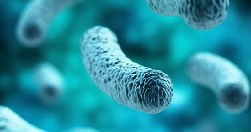 Probiotici - pravilna primena: Kako izabrati pravi probiotik?
